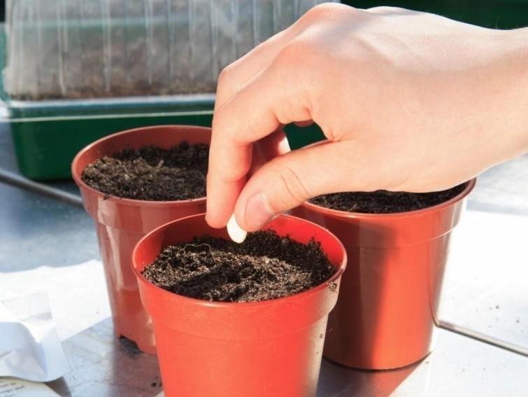 Comment faire pousser des courgettes sans jardin - Faire pousser des courgettes ...