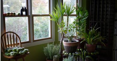 9-plantes-increvables-qui-purifient-l-air-de-votre-maison