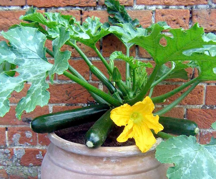 Courgettepot