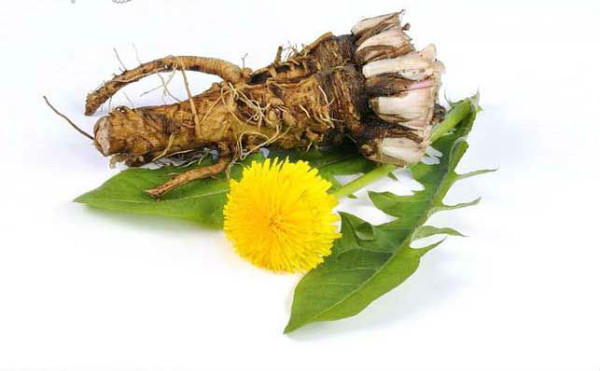 Dandelion-Root-Tea1-600x371