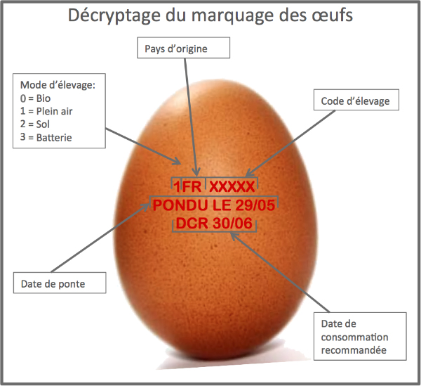 decryptage-marquage-oeufs-1
