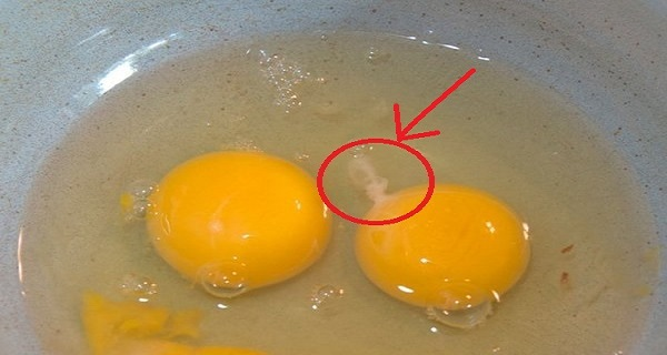 Have-You-Ever-Noticed-The-White-String-Inside-A-Raw-Egg-Here's-What-It-Is