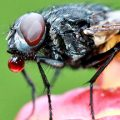 chasser-les-mouches-maison-eloigner-insectes-astuces-00-ban