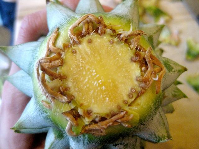 faire-pousser-un-ananas-avec-la-tête-racines