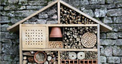 jardinage_bio_pourquoi_vous_devriez_absolument_avoir_un_hotel_a_insectes