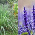 mosquitoe-plants-FI-759x420