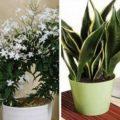 10-plantes-que-vous-devriez-avoir-dans-votre-chambre-pour-un-meilleur-sommeil-725x375