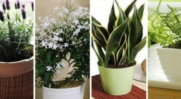 10 plantes que vous devriez avoir dans votre chambre pour un meilleur sommeil elles mettent de. Black Bedroom Furniture Sets. Home Design Ideas