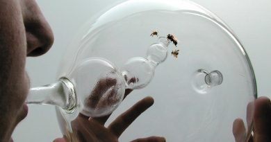 Bees-Can-Be-Trained-To-Detect-Cancer-In-10-Minutes