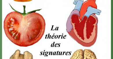 theorie signature