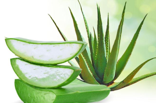 Plantes contre le diab te du type 2 - Ou trouver de l aloe vera en plante ...
