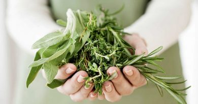 Handful-Herbs-You-Can-Grow-on-Your-Own-520x290