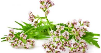 Understanding-Valerian-Flowering-Herb-in-Natural-Remedies-600x375