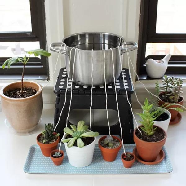 aprende-a-regar-las-plantas-si-tienes-que-viajar