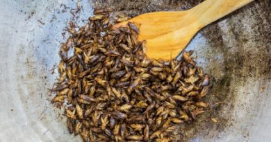 uploded_insectes_comestibles-1466093305