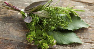Fresh bouquet garni with different herbs