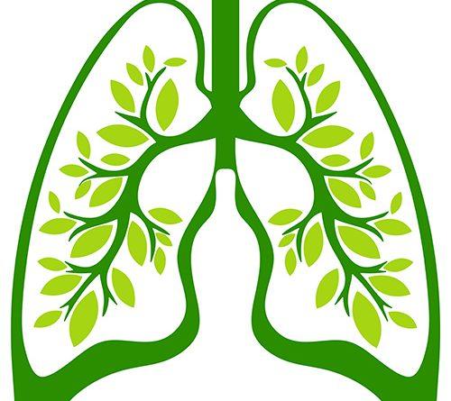 Die grüne Lunge