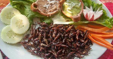 assiette-insectes