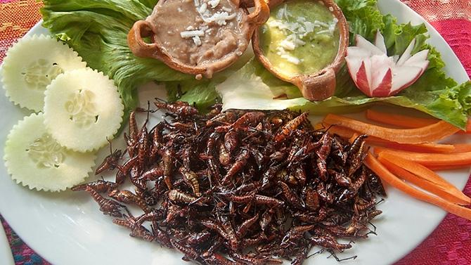 Restaurant D Insecte Lyon