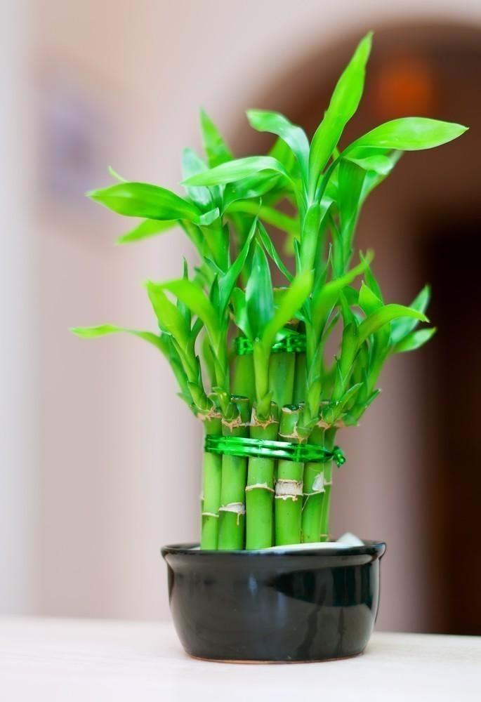 Les 7 meilleures plantes avoir dans sa salle de bain for Plante bambou pour salle de bain