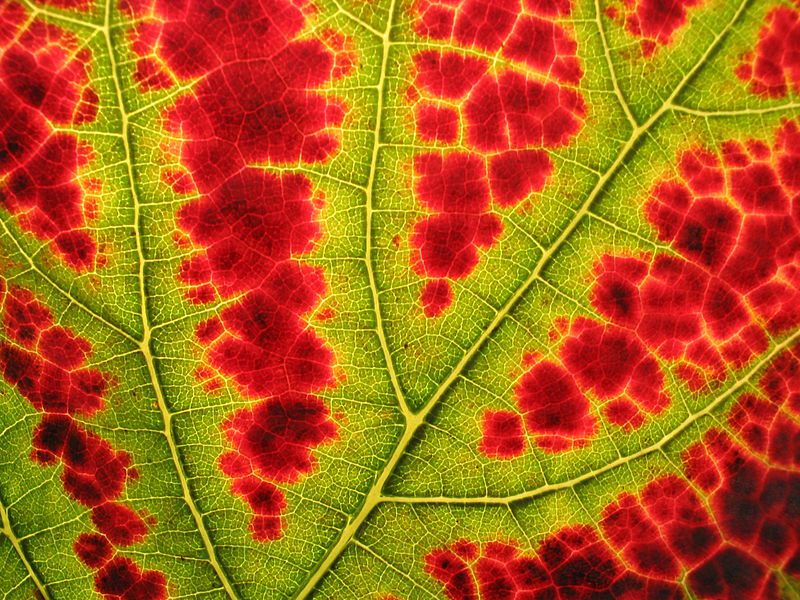 pourquoi-les-feuilles-changent-de-couleur-3