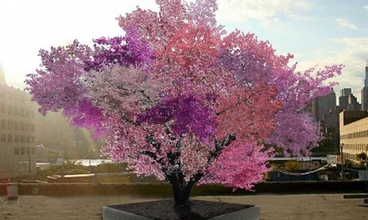 arbre-40-fruits