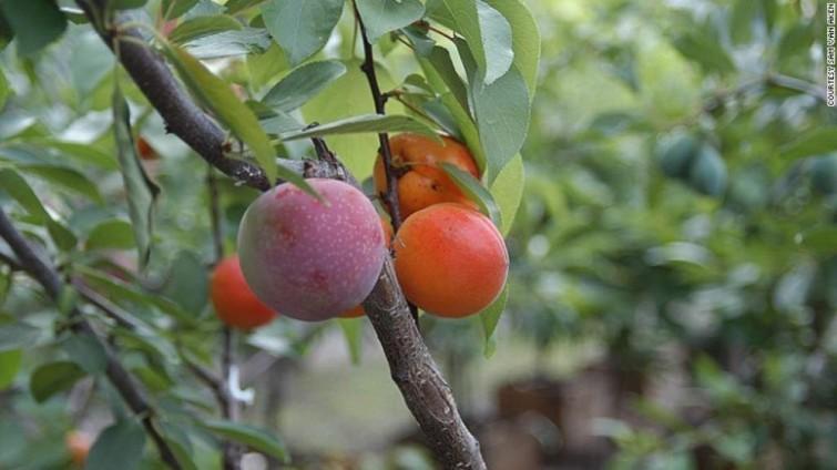 crop-57c6e6c390475_crop