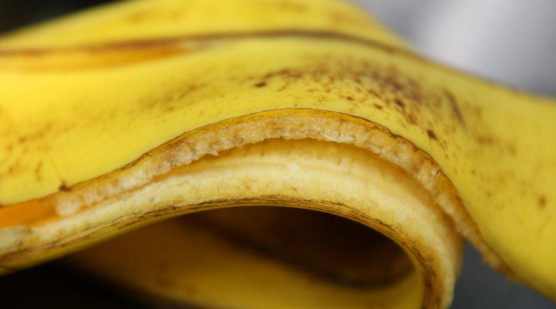 Fruits l gumes - Faire pousser des bananes ...