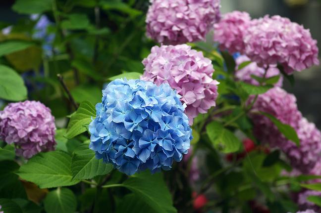 8 plantes de jardin populaires qui sont incroyablement - Fleur de poison ...