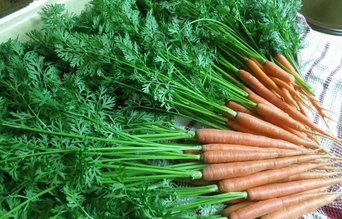 Ne jetez plus vos fanes de carottes mangez les - Cuisiner fanes de carottes ...