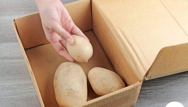 comment conserver des pommes de terre jusqu 1 an. Black Bedroom Furniture Sets. Home Design Ideas