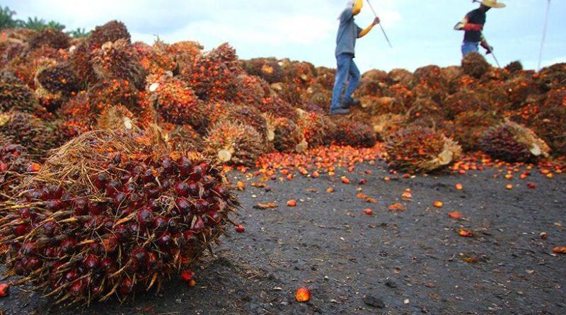 Un supermarch britannique va interdire l huile de palme for Alimentation chien maison