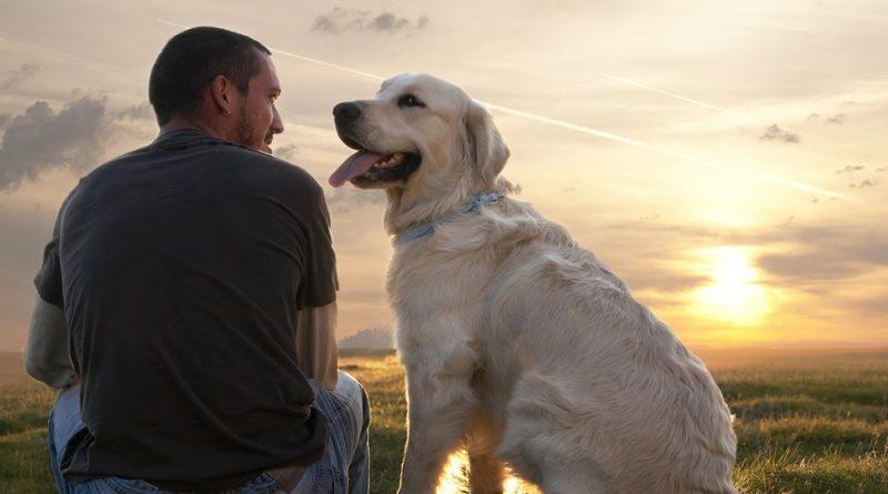 Votre chien peut reconna tre votre tat d esprit for Alimentation chien maison